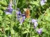 Butterfly & Wild Geraniums