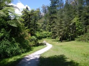 Hiking among the Tree Ferns